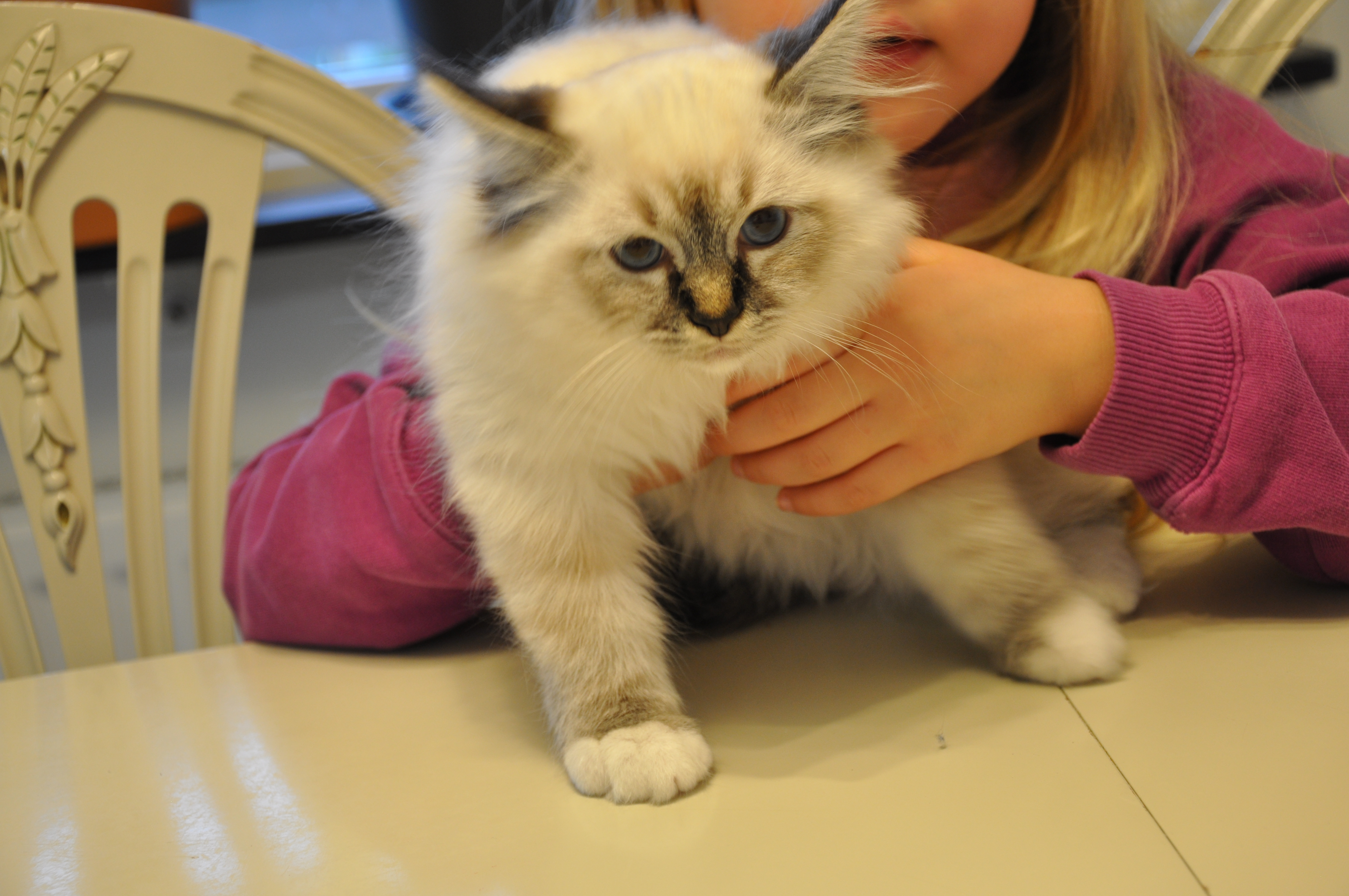 dolda fel försäkring kattungar